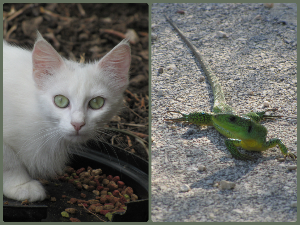 My favourite cat and lizard photos from Paxos