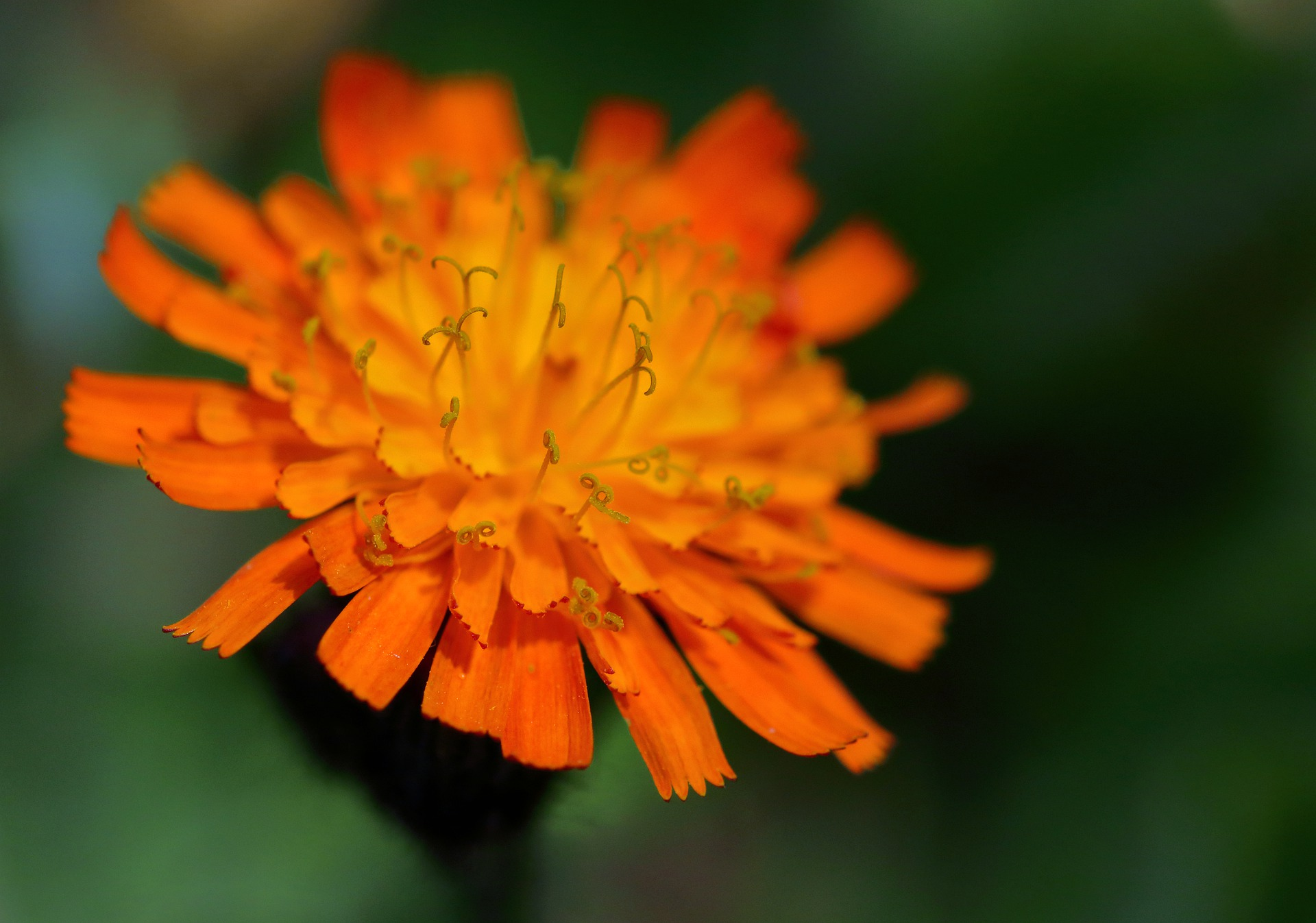 close up of an orange flower